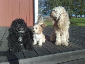Teddie, Theo F. 2010 och Angel.
